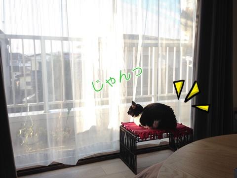猫マンション窓辺