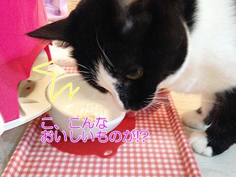 猫ささみおやつ感激