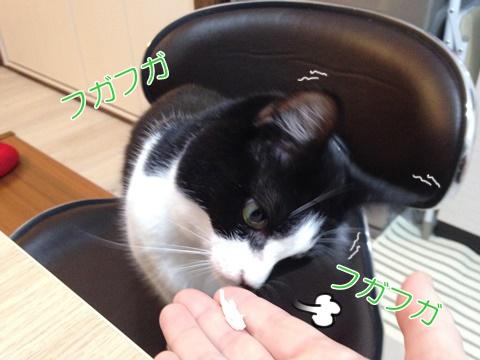 猫手から食べない2