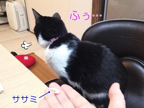 猫手から食べない理由