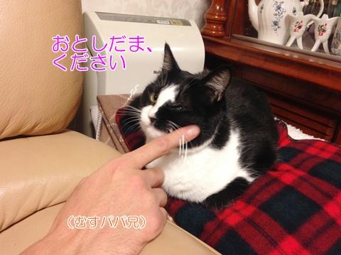 猫のお正月 お年玉おねだり