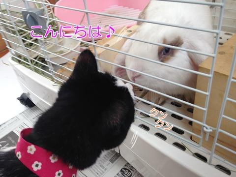 猫とうさぎの初対面