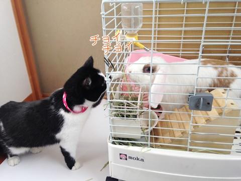 猫とうさぎの相性は?同居できるか襲うのか・・・
