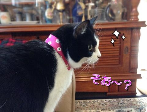 猫のつけ襟横から見たところ