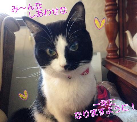 猫ムスビのお正月♪首輪をつけえりに新調(クリーマで)^^♪