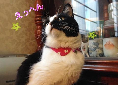猫のえりつき首輪