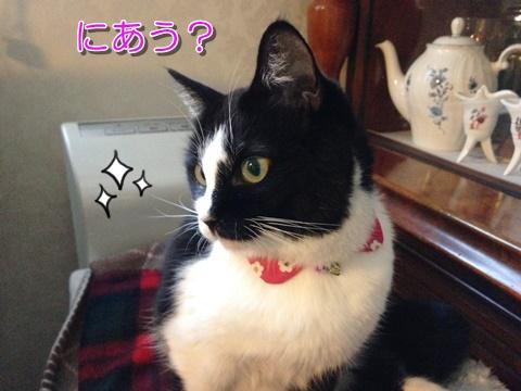 猫のつけ襟手作りcreema