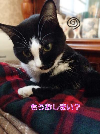 猫とうさぎの相性