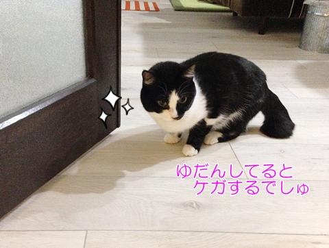 猫 ケガするぜ!