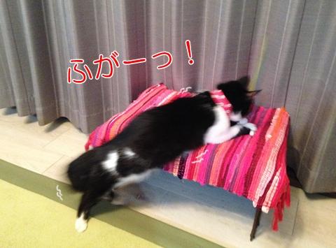 猫 運動不足 解消方法