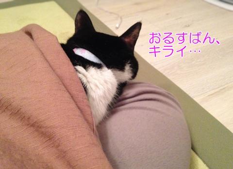 猫お留守番キライ