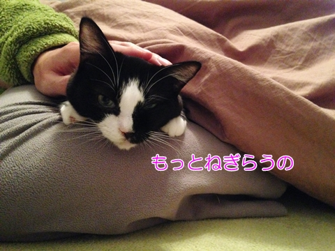 猫撫でられるまで動かない