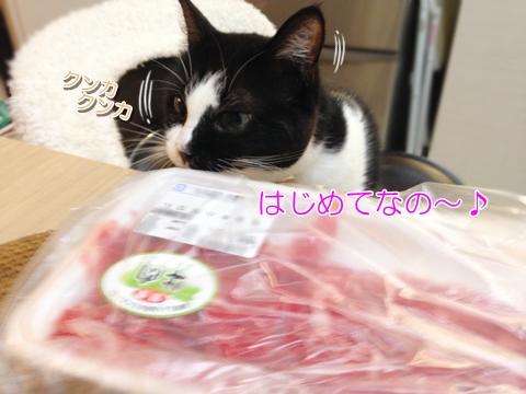 猫は牛肉の生を食べる?猫の日のできごと