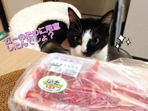 猫は牛肉が好き?
