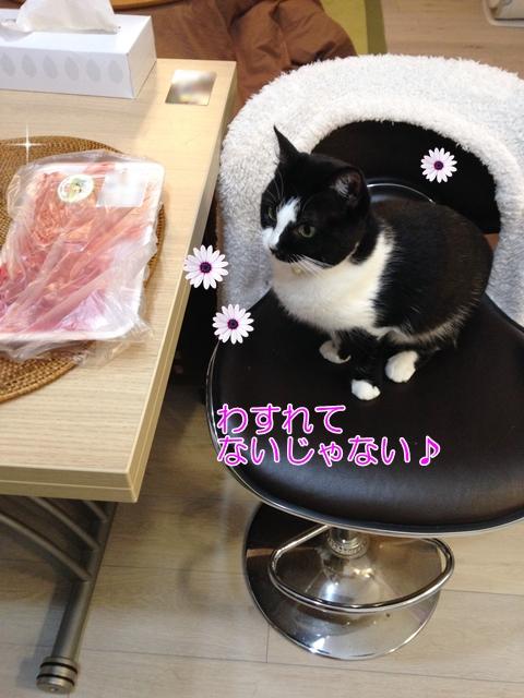 猫 生の牛肉は食べる?