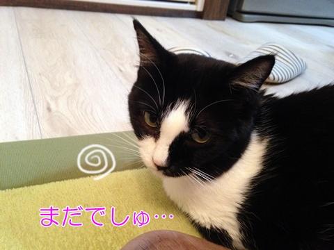 猫便秘にはビオフェルミン?