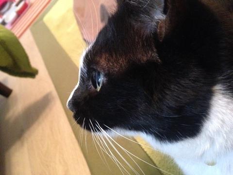 猫の目 水晶