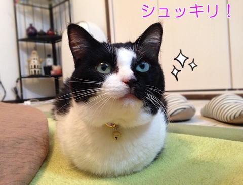 猫の便秘解消対策