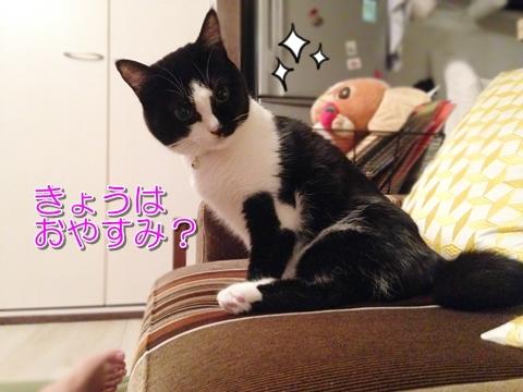猫 飼い主の休み 喜ぶ