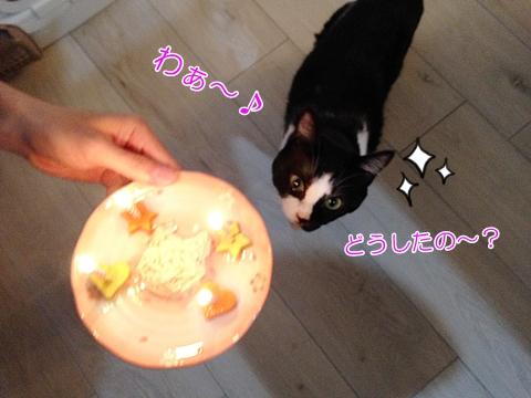 猫ムスビ、うちの子1年記念日&誕生日、スペシャルメニュー!