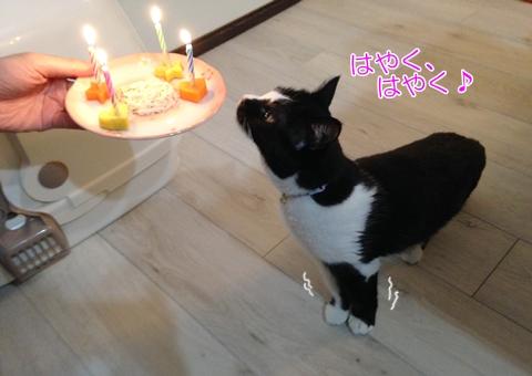 猫 誕生日ケーキ