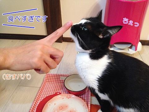猫 食べ過ぎ注意
