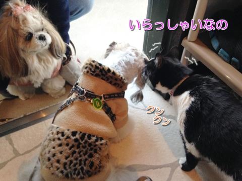 猫と犬は仲良しになる?喧嘩する?ムスビの新しいお友達
