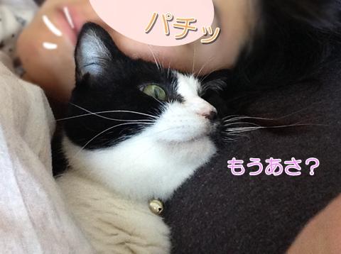 猫ムスビ、添い寝の寝顔がヒドイ件