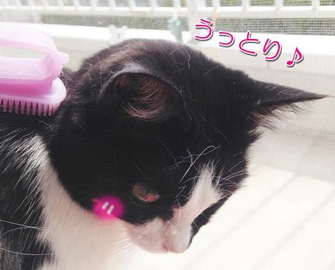 猫がブラッシングを嫌がるなら、やさしくやるのがコツでした♪