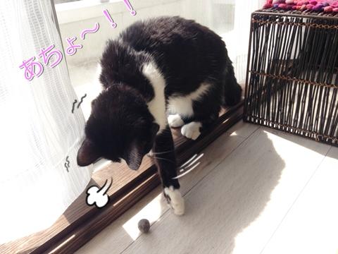 猫 お気に入りおもちゃ 毛玉ボール