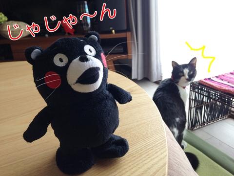 猫ひげ抜ける換毛期♪ムスビのねこひげスタンド