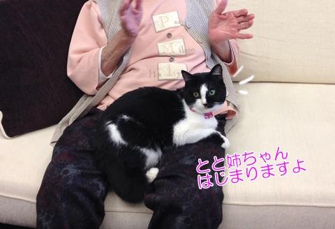 猫ひざの上にのる