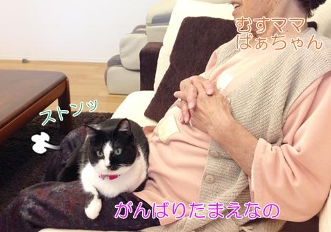 猫とおばあちゃん