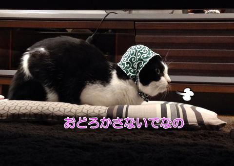 ねこどろぼう頭巾