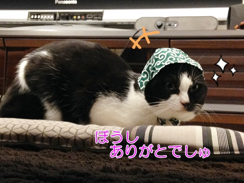 猫かぶりもの
