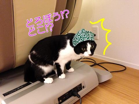 猫ムスビ、実家でプレゼントをもらう(ねこ泥棒)