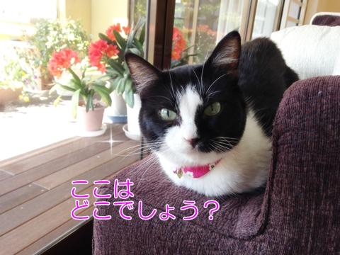 猫ムスビのゴールデンウィーク実家訪問