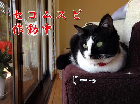 猫自宅警備中