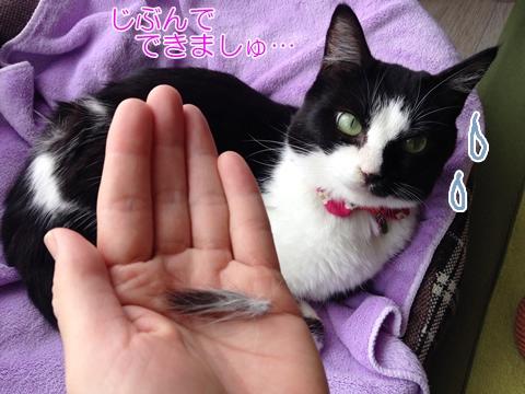 ネコ毛玉できる