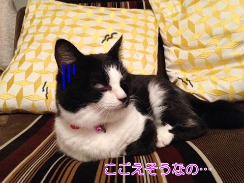 猫 こたつ撤去悲しい