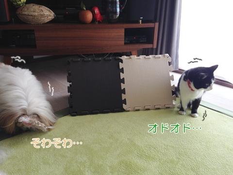 猫 犬 どう遊ぶ