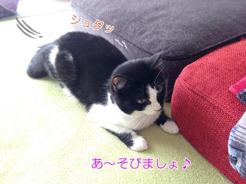 猫ムスビ、仲良しな犬のお隣さんとの遊び方♪