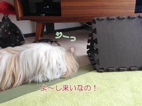 犬と猫 遊び方