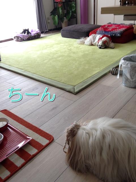 猫と犬 同じ空間