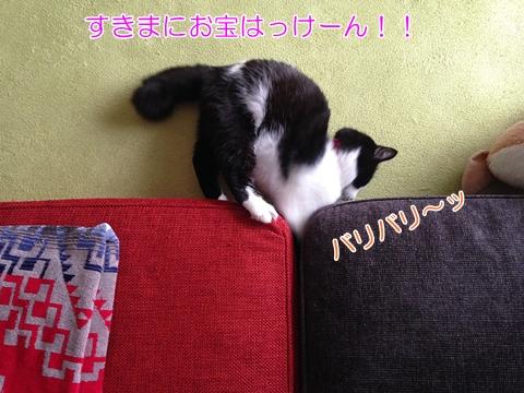 猫 すきまを掘る