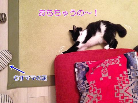 猫 つめとぎ 麻