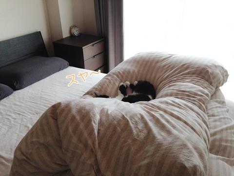 猫 ベッドで待つ