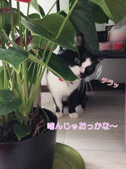 猫は観葉植物を食べる?無害で大丈夫なものは?