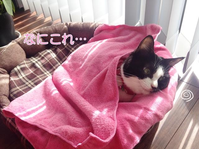寒くなってきましたね!おくるみムスビ