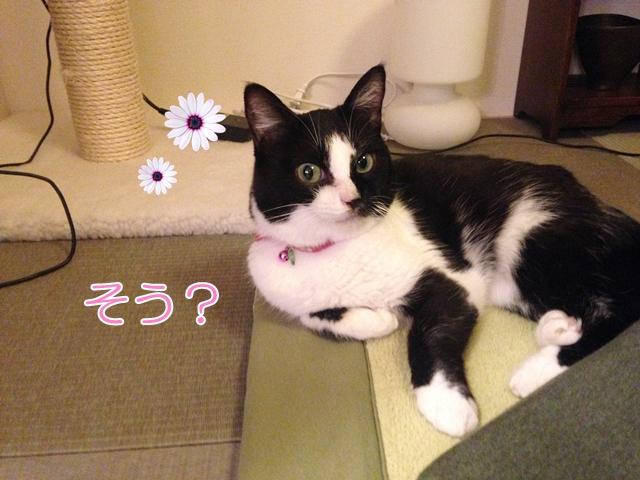 猫 体調悪い?